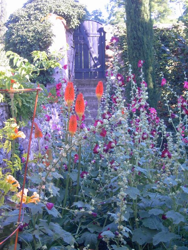 Fackellilien / Kniphofia, Garten Palatina Keramik